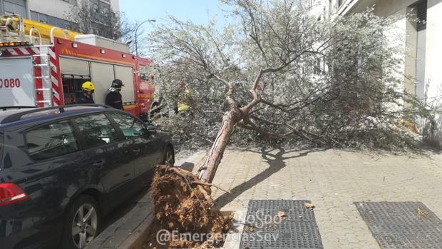 Una de las incidencias producidas este sábado debido al fuerte viento ha sido la caída de un árbol