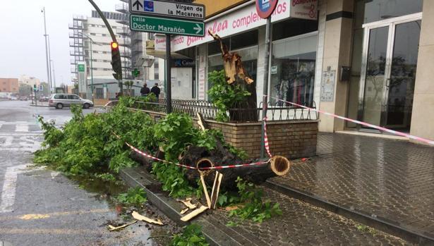 Ramas caídas en Sevilla capital