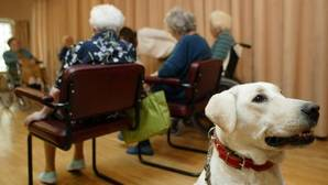«Nido vacío»: ponga una mascota en su vida