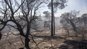 El incendio se llevó por delante casi 8.500 hectáreas