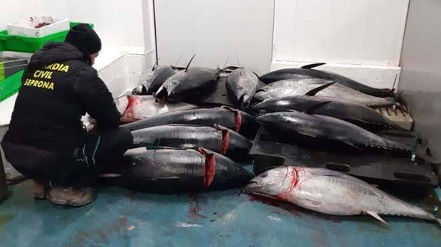 Blanqueo de atún furtivo, lavado de dinero negro