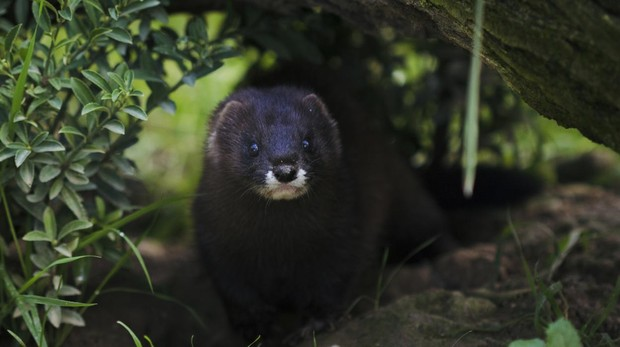 Las especies amenazadas en España se han duplicados en dos décadas