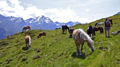 Caballos en Kühtai