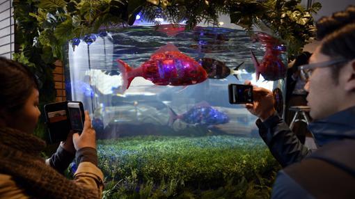 Una pareja fotografía peces-robot en el vestíbulo del nuevo «Henn na Hotel Maihama Tokyo Bay»