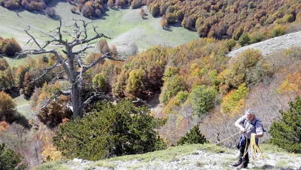 Uno de los investigadores junto a «Italus», el árbol más antiguo de Europa, en el Parque Nacional Pollino