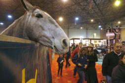 Sicab, el valor del caballo de pura raza como marca y fuente de riqueza